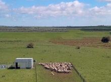 Consolidar mercado de EEUU y carcasas mayores de 22 kilos, entre los objetivos del compartimento ovino